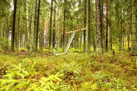 Kuvauksissa metsässä - kuvausteline.