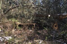 YKSEYS 2019, Kuusiston Taidekartano, Kappelinmäen luontopolku, Kuusisto, Kaarina, metsään lahoava teos